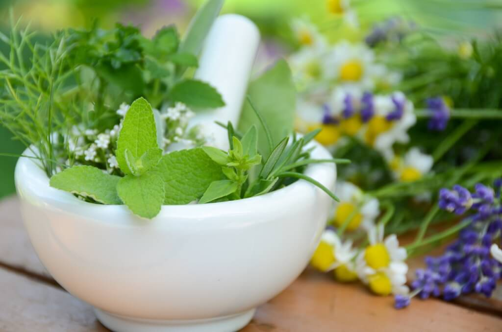 Heilpflanzen & Heilkräuter